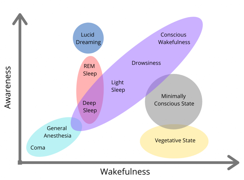 "A graph of wakefulness (x axis) and awareness (y axis) is depicted. Close to the intersecting point is a circle which contains the words ""coma, general anesthesia"" in a linear presentation. This circle connects to a larger oval also presented linearly which contains the words ""deep sleep, light sleep, drowsiness, conscious wakefulness"". The word Deep Sleep is also encompassed by an overlapping circle with the words ""REM Sleep"" also contained above it on the Awareness y-axis. Above this is a circle with the word Lucid Dreaming. Below the words Conscious Wakefulness and Drowsiness is the words ""Minimally conscious state"" in another circle. Below this is a circle with the words ""vegetative state"""